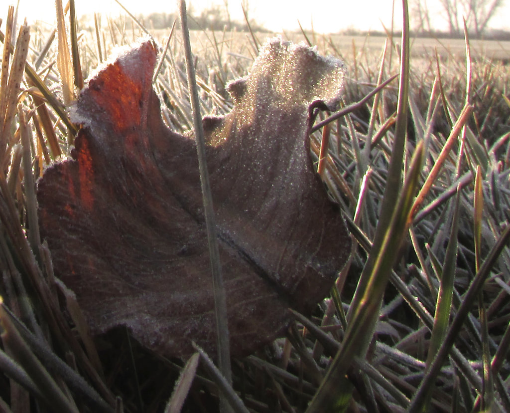 Early morning frost image with a tree leaf in the picture