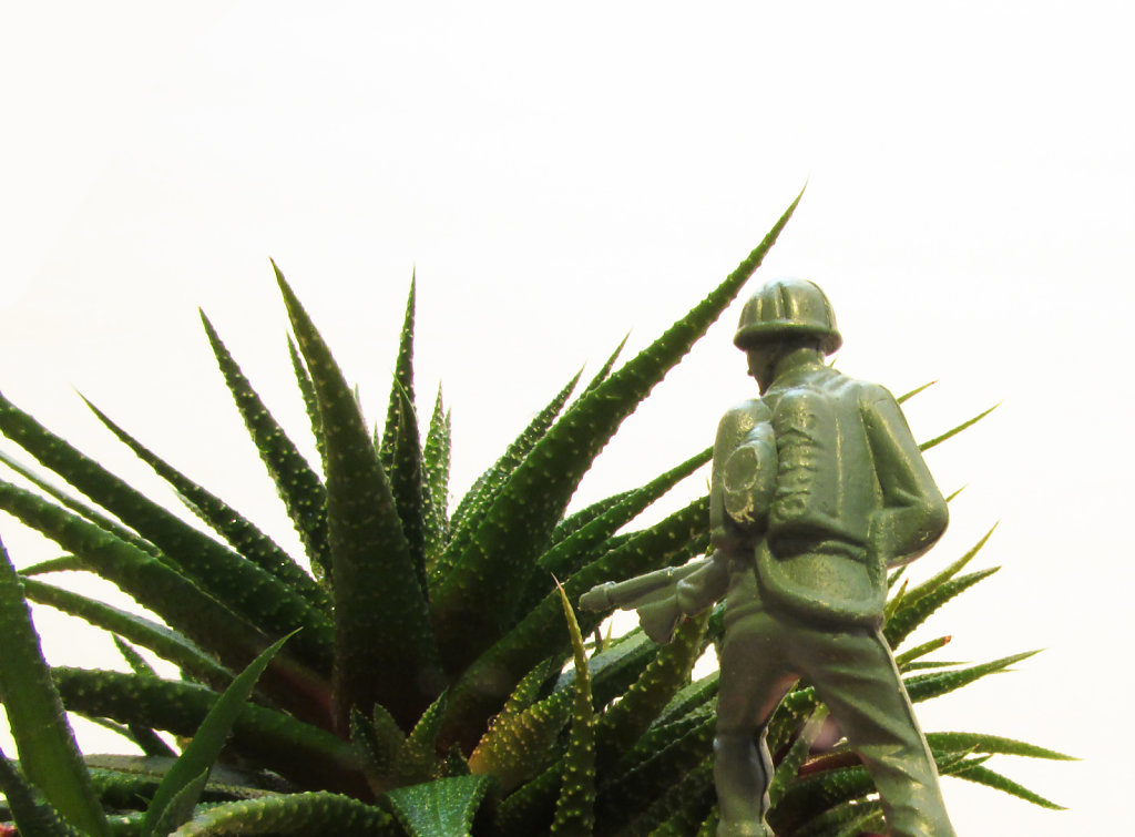 Still life image of a army soldier in aloe