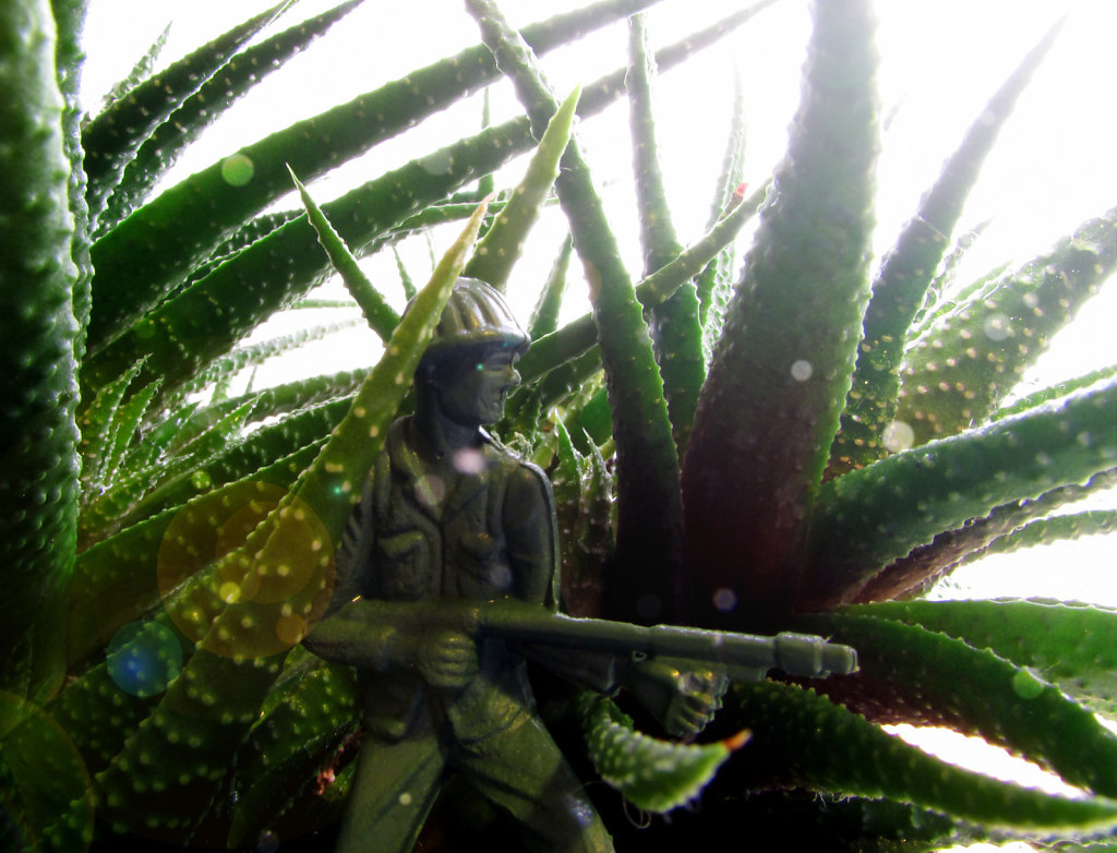 Plastic Army man hiding in an aloe plant