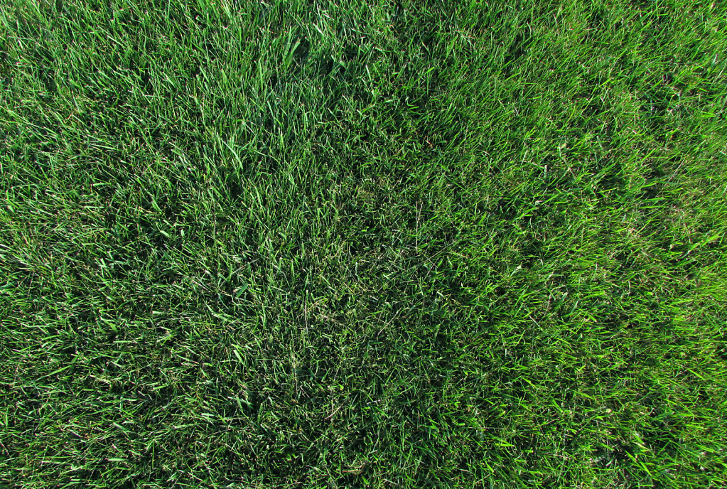 Photo looking down on green grass