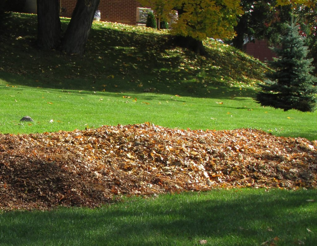leaves raked to the edge of curb