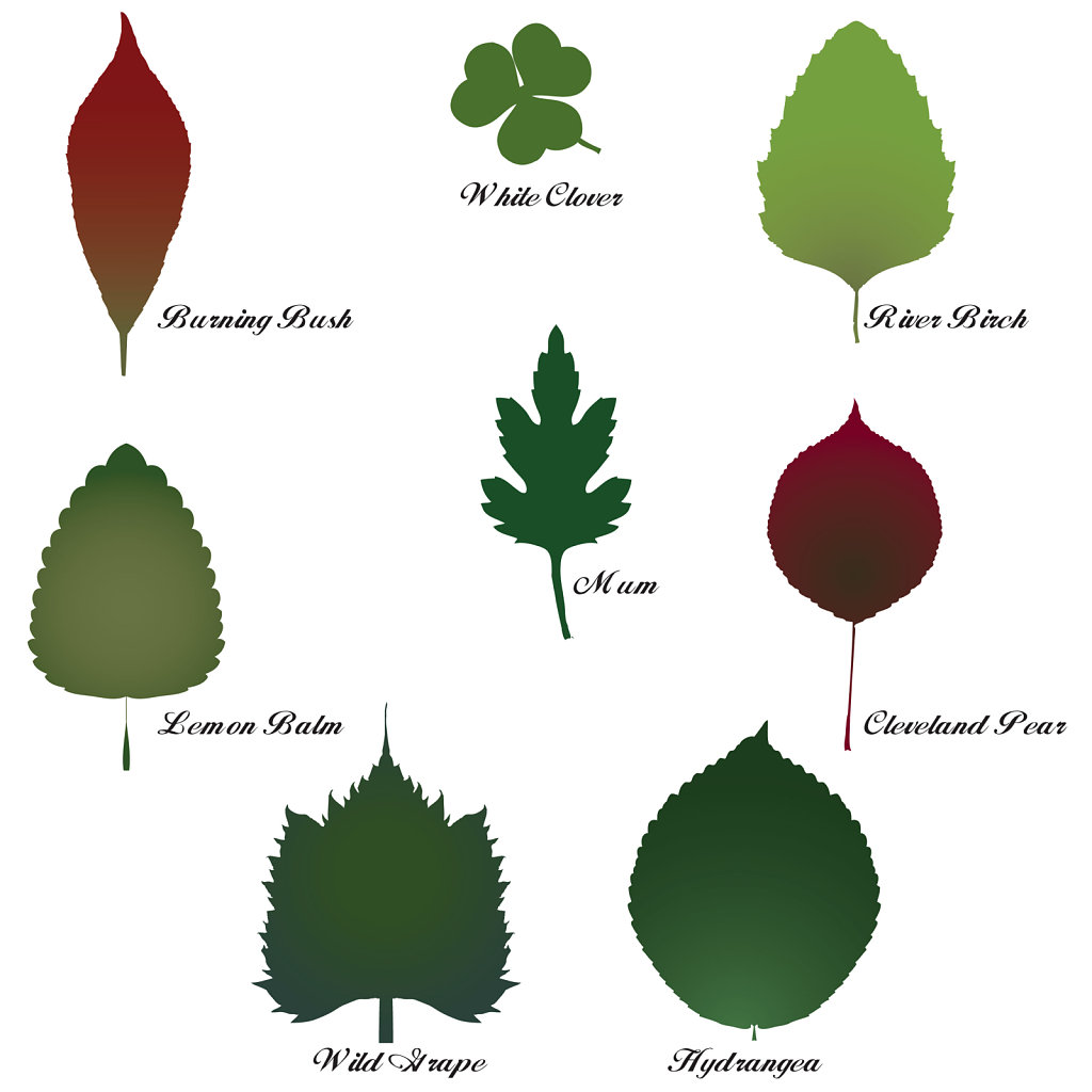 leaf shape identification