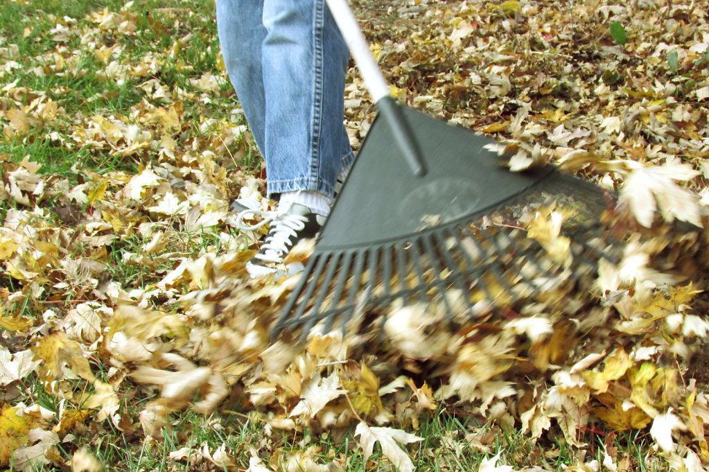 Picture of kid raking fall leaves