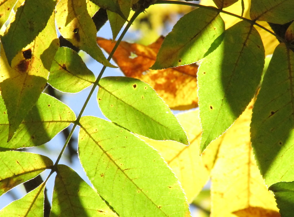 tree leaves background pic