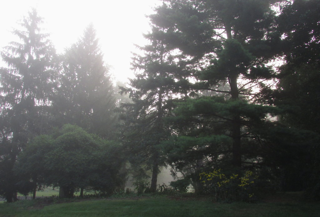 Morning fog picture in the park